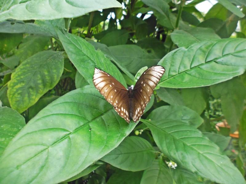 wyspa kwiatów -motyl