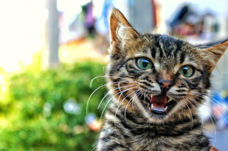 śmieszne historie - kot