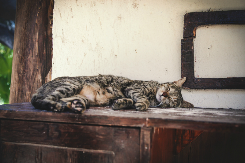 zwariowane sny - słodki kot