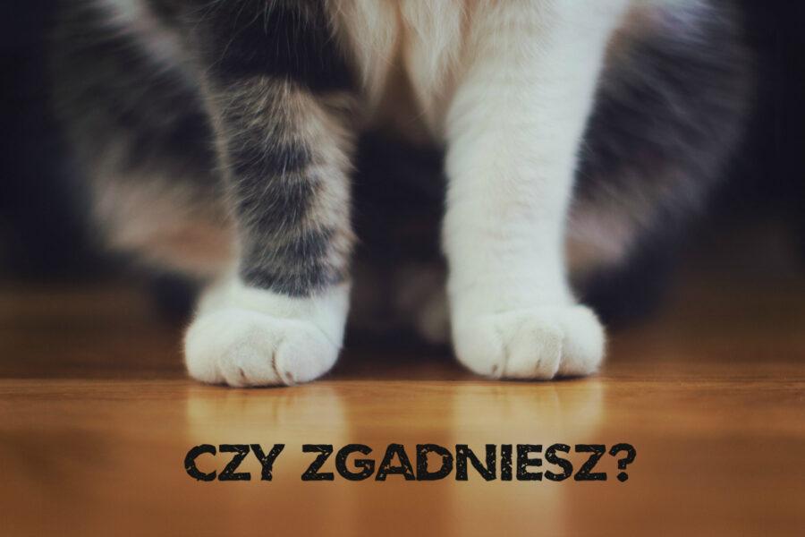kot - czy zgadniesz kto zabił