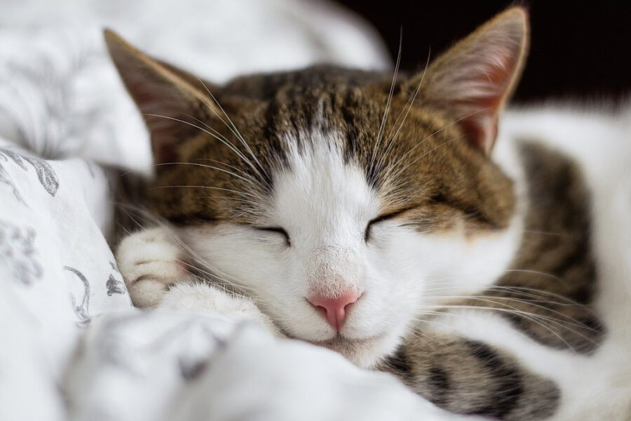 kot - studia - uśmiechnij oczy #2.jpg