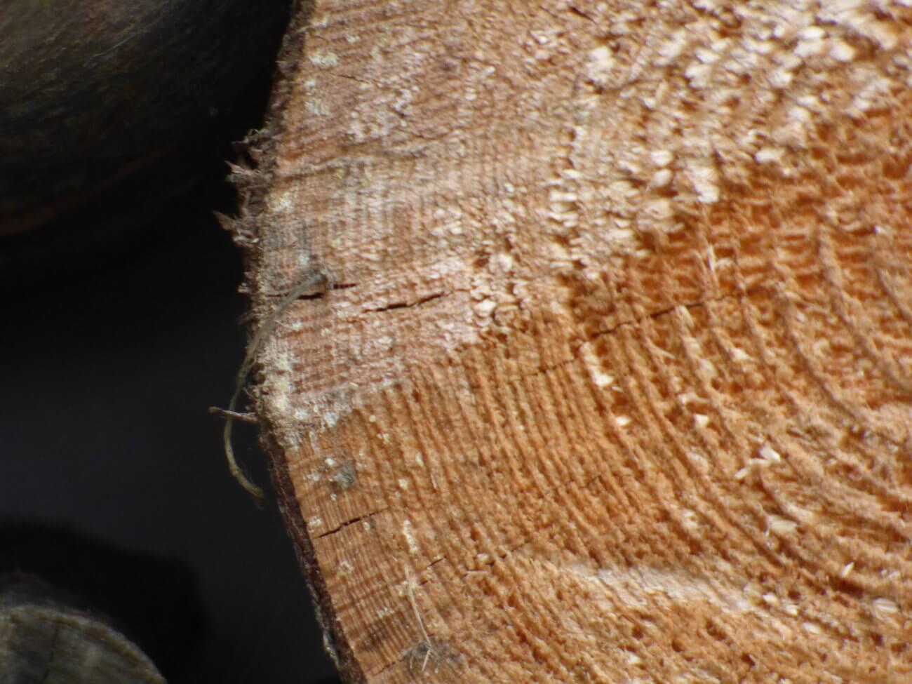 6 myśli które ma każdy student podczas pisania pracy licencjackiej - drewno
