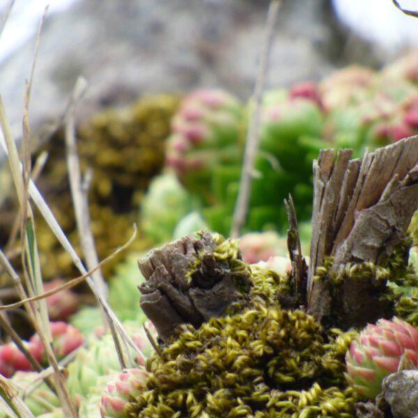 Rośliny na skałach koło zamku w Mirowie - tu i teraz - wrzesień 2018 - na praktykach w szkole podstawowej w 1-3